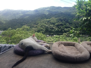 A cute cat enjoying a sleep, while in the background the green mountains stretch beyond eyesight!