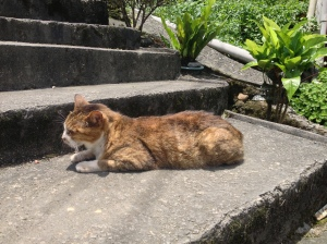 As you'll see, the magic about Houtong is that the cats are really laying around everywhere, and nobody (not even the dogs!) seems to bother!