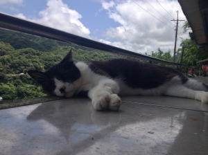 In the burning heat of this sunny day, not only this cat was feeling like taking a nap!