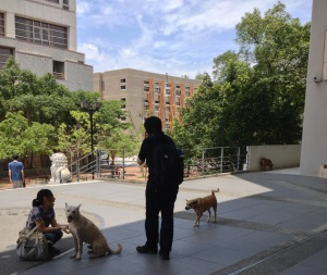 Students play with the dogs in front of the library!